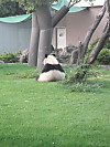 Panda2_2